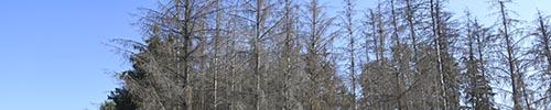 Waldschäden Schwerte - Iserlohn